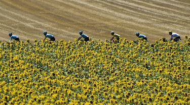 Pebalap Italia, Fabio Aru (4kanan) menggunakan jersey kuning bersama timnya melintasi kebun bungan pada etape ke-14 Tour de France dengan jarak 181,5 km antara Blagnac dan Rodez, (15/7/2017). (AFP/Pphilippe Lopez)