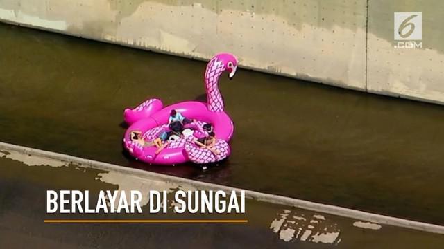 Berita Burung Flamingo Hari Ini Kabar Terbaru Terkini Liputan6 Com