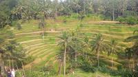 Sawah berundak di Tegalalang, Ubud, Bali. (Liputan6.com/Dewi Divianta)