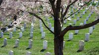 Ilustrasi meninggal, kematian, makam, kuburan. (Photo by Suzy Turbenson on Unsplash)