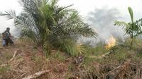 Beberapa warga Kota Dumai berusaha memadamkan kobaran api di lahan gambut. (Liputan6.com/Istimewa/M Syukur)