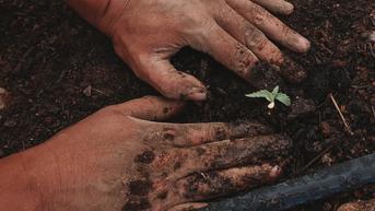 Binance Rilis Proyek NFT Tree Millions untukTanam 10 Juta Pohon