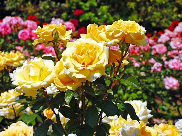 7 Taman Bunga Terindah Di Dunia Saat Musim Semi Lifestyle Liputan6 Com