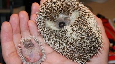 Gemas! 10 Potret Bayi Hewan yang Mungkin Belum Pernah Anda Lihat