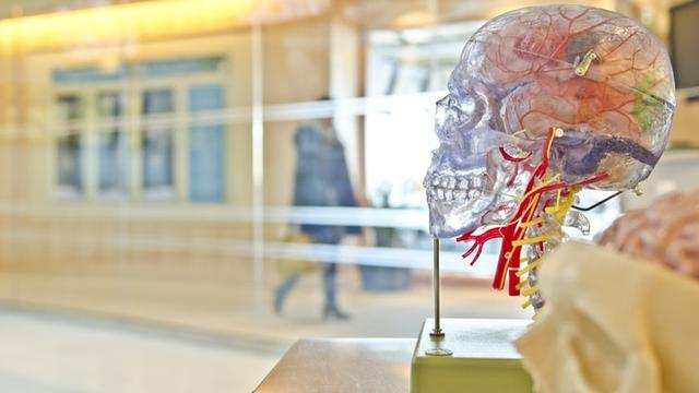 Ilustrasi kematian otak