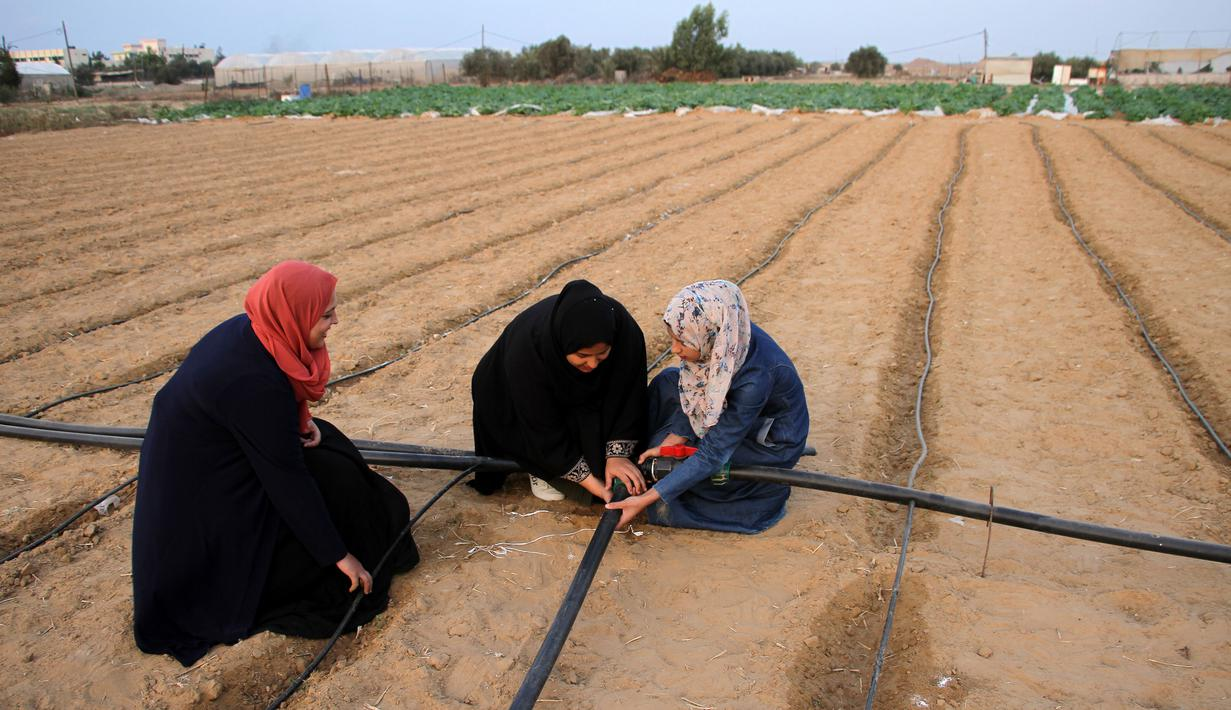 Sejumlah wanita Palestina bekerja di sebuah pertanian dekat perbatasan antara Jalur Gaza dan Israel, sebelah timur Kota Khan Younis, Jalur Gaza selatan, 28 Oktober 2020. Israel memberlakukan zona penyangga keamanan selebar 300 meter di sepanjang perbatasan timur Jalur Gaza. (Xinhua/Rizek Abdeljawad)