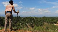 Hasil investigasi LBH Banda Aceh menyatakan, land clearing (pembukaan lahan) yang dilakukan PT DPL pada 2017 berlokasi di lahan masyarakat. (Liputan6.com/ Rino Abonita)