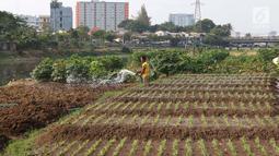 Warga menyiram sayur mayur yang ditanam di bantaran Kanal Banjir Barat, Jakarta, Jumat (5/10). Selain dijual ke pasar, sayur mayur tersebut juga untuk konsumsi sehari-hari. (Liputan6.com/Immanuel Antonius)