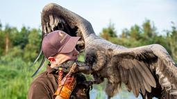 Peter Wenzel melatih burung condor muda bernama Molina di Eagle Reserve, Bindslev, Denmark, 27 Agustus 2019. Condor bisa memiliki lebar sayap 3,5 meter dan berat 15 Kg. (Henning Bagger/Ritzau Scanpix/AFP)