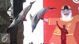 Pelatih mengintruksikan lumba lumba beratraksi di Ocean Dream Samudera, Ancol, Jakarta, Rabu (3/2). Ancol menyiapkan sejumlah acara seperti barongsai dan pertunjukan lumba-lumba sambut Tahun Baru China ke-2567. (Liputan6.com/Immanuel Antonius)