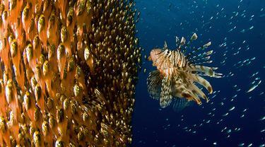 Cantiknya 5 Hewan Laut Ini Ketika Berpose di Kamera