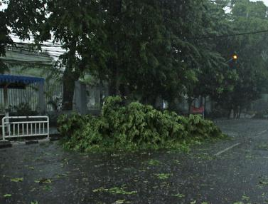Pohon Tumbang di Jakarta