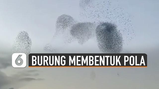 Fenomena unik terjadi saat kawanan burung-burung membentuk pola di langit.
