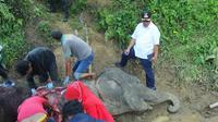 Neneng mati pada usia 55 tahun. Gajah dengan berat 3 ton tersebut selama ini menjadi salah satu satwa yang menjadi daya tarik pengunjung di Medan Zoo.