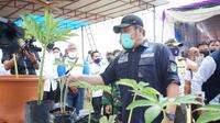 Gubernur Sumsel melihat bibit tanaman porang yang akan dibudidayakan di Kabupaten Banyuasin Sumsel (Dok. Humas Pemprov Sumsel / Nefri Inge)