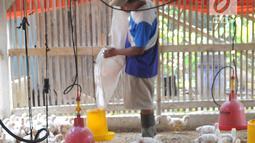 Peternak memberikan makan pada ayam pedaging broiler di kawasan Cipelang, Bogor, Jawa Barat, Selasa (24/7). Harga day old chicken (DOC) saat ini mencapai Rp 7.500 per ekor. (Merdeka.com/Arie Basuki)