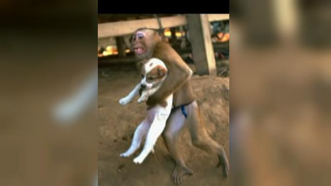 Monyet penyelamat (Capture/UTUBE)