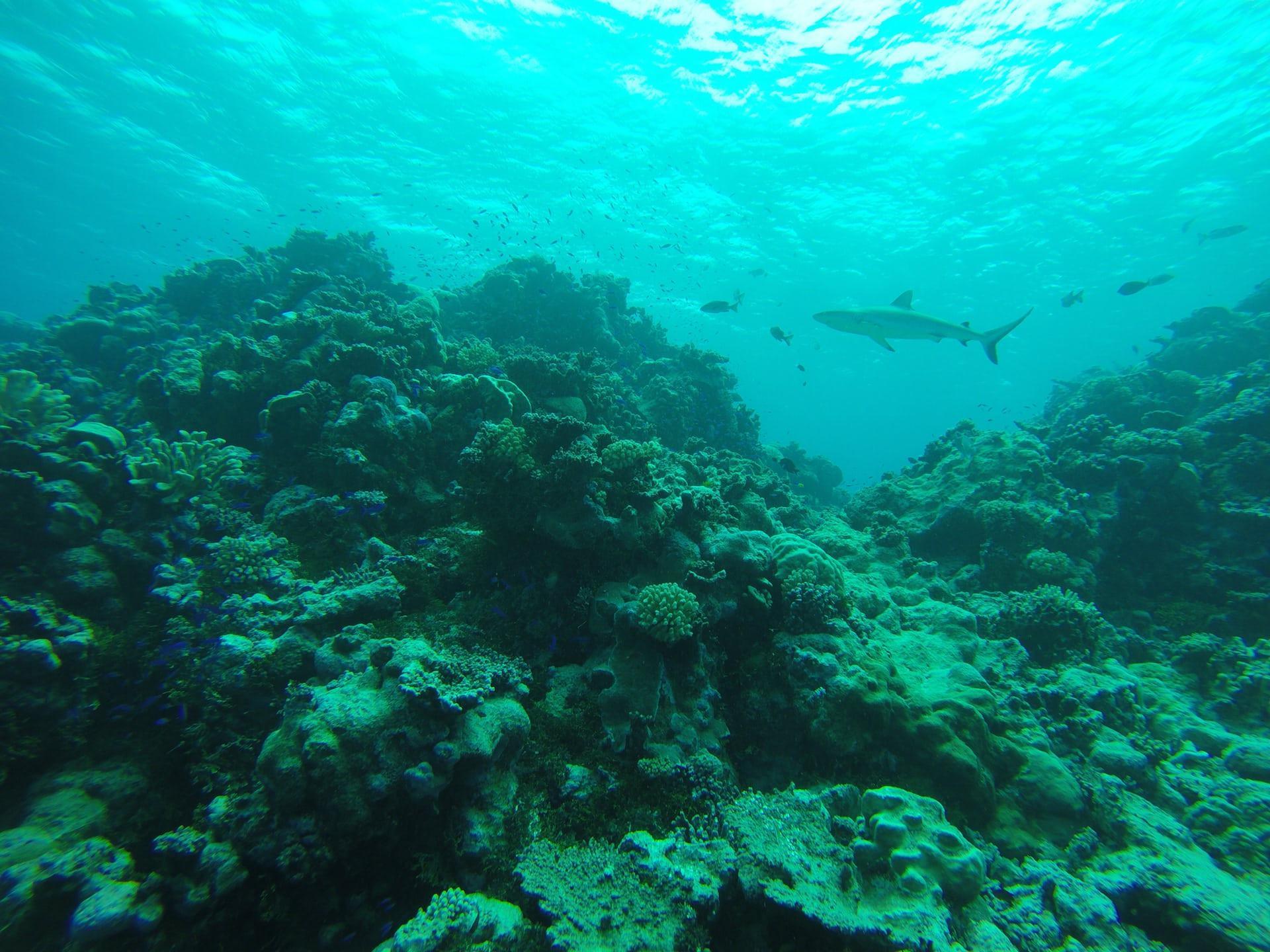 Kondisi biota laut di Bikini Atoll berdasarkan pengamatan ilmuwan Stanford University (Credit: Steve Palumbi)