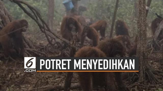 Karhutla di wilayah Sumatera dan Kalimantan berdampak negatif . Tak hanya berimbas pada aktivitas manusia namun juga kehidupan satwa liar.