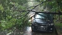 Pohon Tumbang Menimpa Sebuah Mobil di Bogor, Jawa Barat. (Foto: Achmad Sudarno/Liputan6.com)