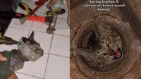 Viral Video Penyelamatan Kucing dari Saluran Kamar Mandi, Bikin Haru. (Sumber: Tiktok/alittsusanto)