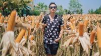 Ringgo Agus Rahman foto di ladang jagung di bagian belakang Kopi Klotok, Yogyakarta. (dok. Instagram @ringgoagus/https://www.instagram.com/p/B4jkcRigPDp/)