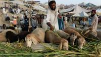 Ilustrasi Idul Adha di Afghanistan. (AFP)