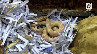 Seorang pria mendapatkan bonus mengejutkan usai dirinya membeli sebuah teko air, yaitu seekor ular