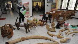 Seorang pejabat konservasi satwa liar Indonesia berdiri di dekat barang barang bukti yang disita sebelum dibakar di Banda Aceh, (22/5). Barang bukti yang dimusnahkan tersebut berupa offset atau hewan yang telah diawetkan. (AFP/Chaideer Mahyuddin)