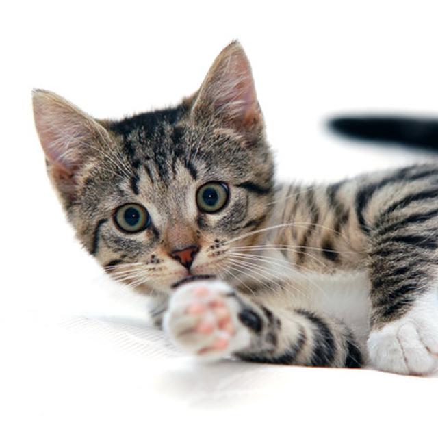 Terungkap Alasan Kucing Belang Tiga Jantan Jarang Ada Health Liputan6 Com
