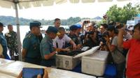 Kementerian Kelautan dan Perikanan bersama TNI AL gagalkan penyelundupan benih lobster (Foto:Liputan6.com/Ajang Nurdin)
