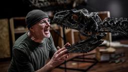 """Seorang pakar Italia merakit kerangka dinosaurus, Allosaurus sebelum mulai dilelang di Balai lelang Drouot, Paris, Jumat (6/4). Allosaurus itu merupakan satu di antara 87 artefak yang dianggap """"kecil"""" dengan ukuran 3,8 meter. (STEPHANE DE SAKUTIN/AFP)"""