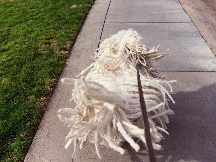 Beast, anjing jenis Hungarian Shepard milik Mark Zuckerberg yang bulunya mirip kain pel (Sumber: Facebook/ Mark Zuckerberg)