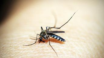 5 Penyebab Malaria yang Wajib Diwaspadai, Kenali Gejala dan Penularannya