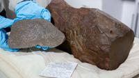 Seorang pria Australia menyimpan sebuah batu besar yang dikiranya emas selama 2 tahun, tetapi ternyata itu adalah pecahan meteor. (Museum Victoria)
