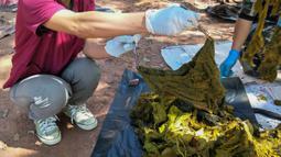Gambar yang dirilis pada 26 November 2019, dokter hewan memegang sepotong pakaian dalam dari perut rusa mati di Taman Nasional Khun Sathan, Thailand. Tujuh kg sampah plastik dan pakaian dalam ditemukan di perut rusa yang diduga mati beberapa hari lalu. (HO/Office of Protected Area Region 13/AFP)