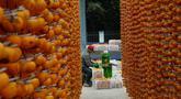Seorang petani mengolah buah kesemek yang segar untuk dijadikan kudapan kering di Desa Maquangou di Wilayah Pinglu, Provinsi Shanxi, China utara, pada 27 Oktober 2020. (Xinhua/Ma Yimin)