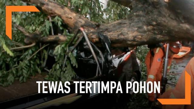 Seorang pengendara mobil tewas setelah tertimpa pohon di kawasan Duren Sawit, Jakarta Timur.