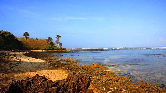 7 Pantai Paling Hits Di Jember Dan Banyuwangi Lifestyle