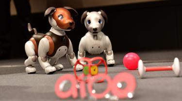 """Robot versi ukuran anak anjing """"Aibo"""" ditampilkan selama konferensi pers di Tokyo pada 23 Januari 2019. Perusahaan elektronik, Sony, memperkenalkan robot anjing yang dilengkap dengan kecerdasan buatan, kemampuan internet, dan kamera. (Kazuhiro NOGI/AFP)"""