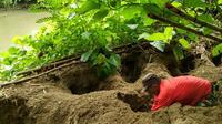 Madi & Jaka, dua warga Pinogu mengali lubang yang berisi telur burung maleo untuk dibawa ke lokasi peneluran pohulongo agar tidak menjadi sasaran predator dan pencuri telur maleo (Dok. BalaiTNBNW)
