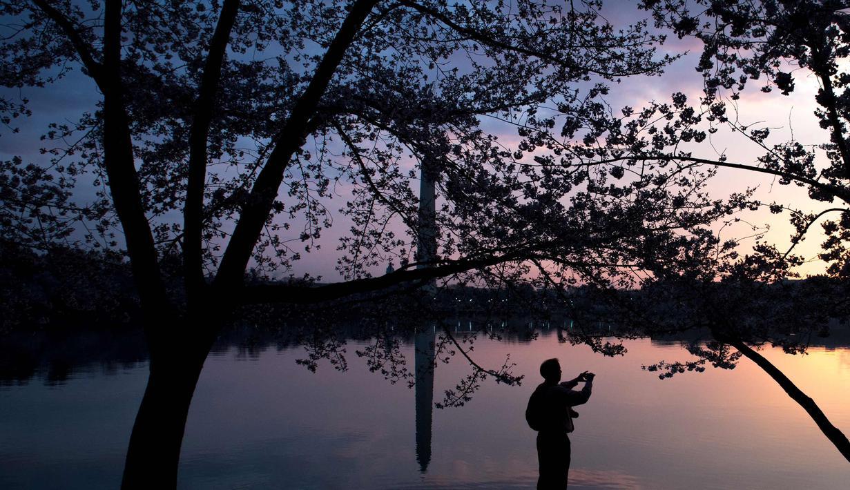 940+ Gambar Pemandangan Indah Bunga Sakura Gratis
