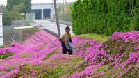 Kuroki Shintomi, pria asal Jepang menanam ribuan bungan untuk menghibur istrinya yang tengah depresi. Foto : boredpanda