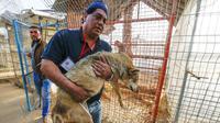 Aksi heroik dokter hewan Amir Khalil yang giat melakukan aksi penyelamatan hewan di daerah konflik. (AFP/ Said Khatib)