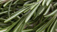 Rosemary yang digunakan sebagai campuran aromaterapi juga memiliki sifat yang dapat mencegah terjadinya kanker