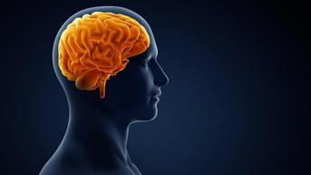 9 Penyebab Pendarahan Otak Seperti yang Dialami Tukul Arwana, Kenali Gejalanya