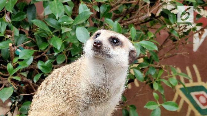 Hasil kamera Oppo Reno 10x Zoom untuk memfoto binatang. (Liputan6.com/ Agustin Setyo W)