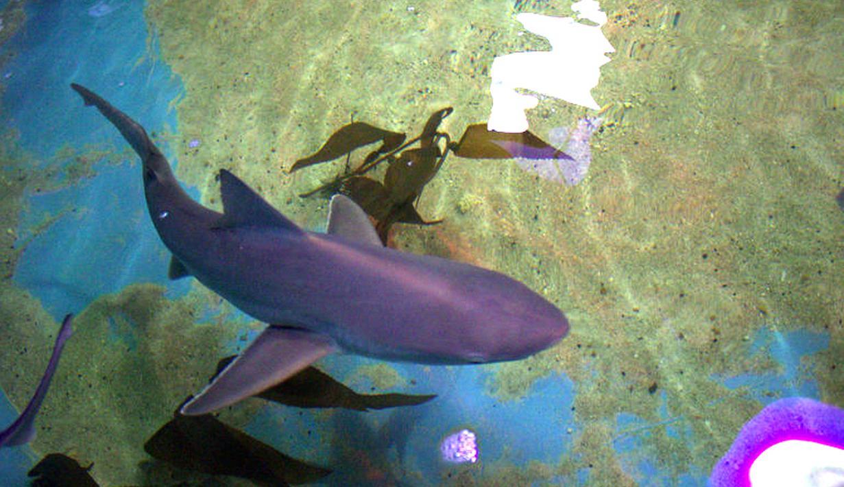 Photo Bikin Merinding Kolam Penuh Ikan Hiu Ditemukan Di Basement