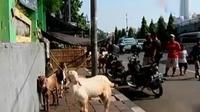Penjual hewan kurban di Tanah Abang, Jakarta Pusat, masih berjualan di trotoar.