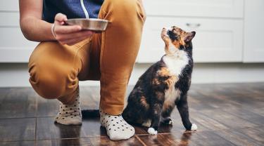 Waspadai 4 Kandungan Cat Food yang Bisa Ganggu Kesehatan Anabul
